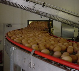 VALLI_EggConveyors-(10)