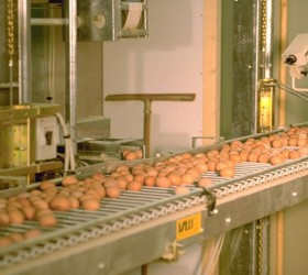 VALLI_EggConveyors-(20)