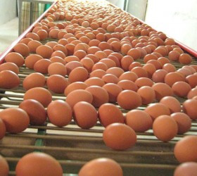 VALLI_EggConveyors-(24)