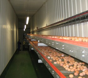 VALLI_EggConveyors-(34)